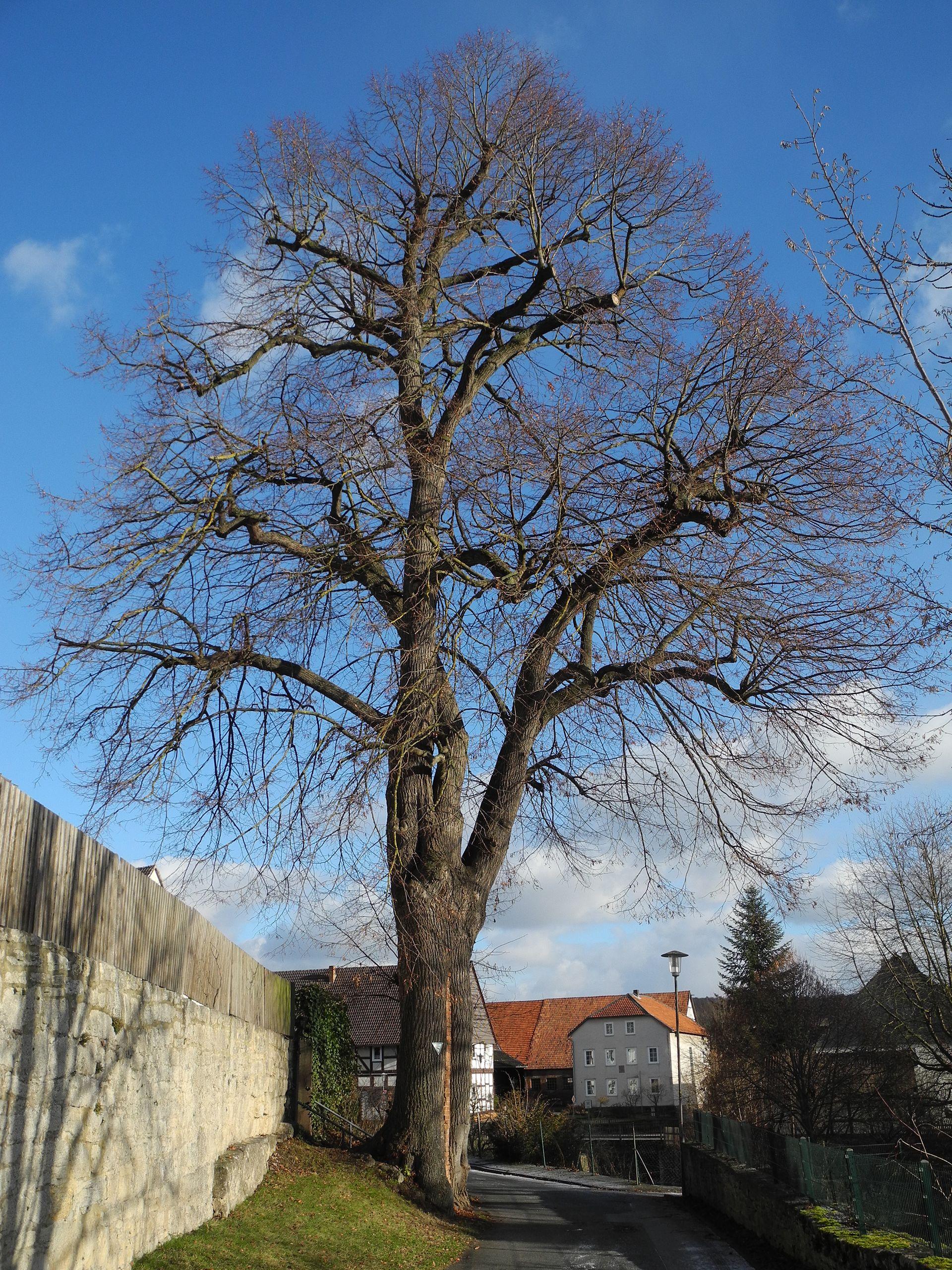 Liste der Naturdenkmale in Liebenau (Hessen) – Wikipedia