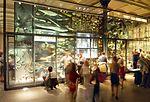 Naturkundemuseum Berlin - Präparationsvitrine.jpg