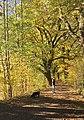 Naturschutzgebiet in Reuth bei Neumark.jpg
