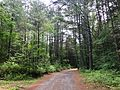 "Nepaug State Forest - ""Tunxis Trail"" Dirt Road Main Entrance Off CT-202.jpg"