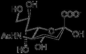 Neuraminidase - N-Acetylneuraminic acid