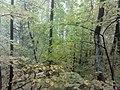 Nevyanskiy r-n, Sverdlovskaya oblast', Russia - panoramio (175).jpg