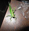 Neznámý hmyz (001).jpg