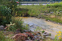North Branch Shamokin Creek.JPG