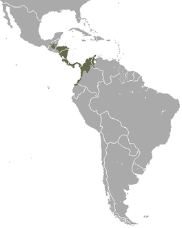 Northern Naked-tailed Armadillo area.png