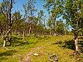 Norwegen Langfjorddalen Naturreservat P1290404.jpg