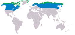 Przybliżony zakres występowania: niebieski - zima, zielony - lato