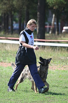 Protection Dog Training Illinois