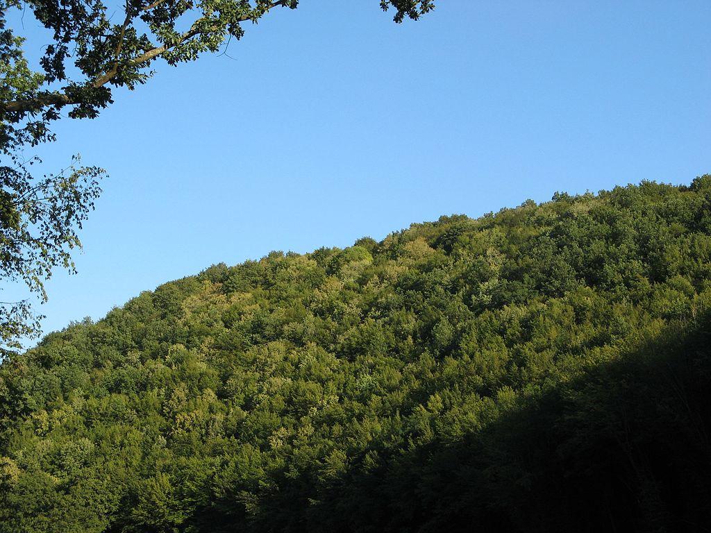Схил хребта пагорбів в урочищі Обіжева