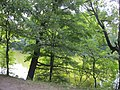 Okhtyrs'kyi district, Sums'ka oblast, Ukraine - panoramio (20).jpg