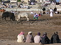 Oman bullfighting (2).jpg