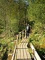 On The Boardwalk - geograph.org.uk - 578970.jpg