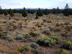 Oregon Badlands meadow P6304.jpg