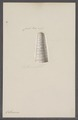 Orthoceras spec. - - Print - Iconographia Zoologica - Special Collections University of Amsterdam - UBAINV0274 091 03 0004.tif