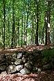 Osbecks bokskogar - KMB - 16001000180364.jpg