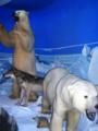 Osos polares.png