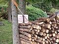 Příchovice, hranice dřeva u cesty od Šumburka.jpg