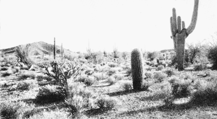 PSM V66 D110 Arizona desert scene without irrigation.png