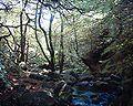 Padley Gorge 09-07-05.jpg