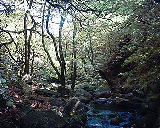 Padley Gorge Valley in Derbyshire, England