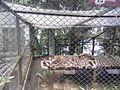 Padmaja Himalayan Zoological Park, Sikkim,.jpg