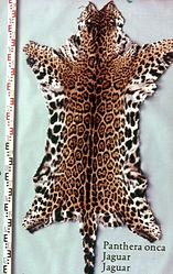 Jaguarfell – Wikipedia