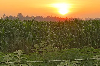 Funza - Image: Paraíso Agricultor