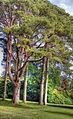 Park (8049421884).jpg