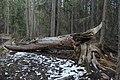 Passeio em Banff 2019 (7639).jpg