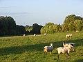 Pasture, Stoke Lyne - geograph.org.uk - 867770.jpg