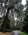 Path in the park (6157395209).jpg