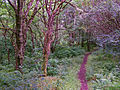 Path through the woods - geograph.org.uk - 1454879.jpg