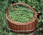 Peas in pods 2016 G1.jpg