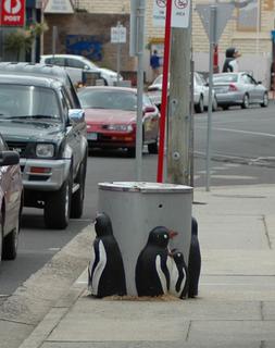 Penguin, Tasmania Town in Tasmania, Australia
