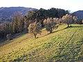 Pescia - Loc. Veneri - Verdi colline - panoramio.jpg