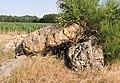 Petit dolmen effondre.jpg