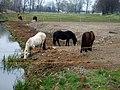 Pferde Taugraben1a.jpg