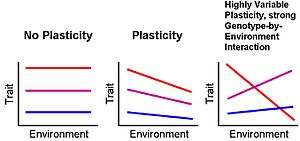 Phenotypic plasticity - Phenotypic plasticity is the ability of one genotype to produce more than one phenotype when exposed to different environments. Each line here represents a genotype. Horizontal lines show that the phenotype is the same in different environments; slanted lines show that there are different phenotypes in different environments, and thus indicate plasticity.