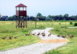 Photo at gaense nationalpark neusiedlersee neu.jpg