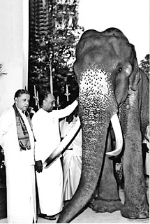 Raja (elephant) Holy Tusker of Temple of the Tooth