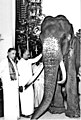 Photograph of Raja (elephant) with Hon J.R Jayewardene & Dr. Nissanka Wijeyeratne.jpg