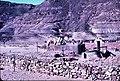 PikiWiki Israel 75802 oasis.jpg