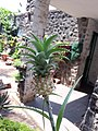 Pineapple flower small.jpg