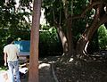 Pintor al Jardí Botànic de València.JPG