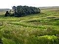 Plantation and sheepfold on Espy Sike - geograph.org.uk - 882166.jpg