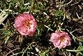 Plants ZOO Dvur Kralove.jpg