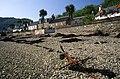 Plockton from the beach - geograph.org.uk - 1084793.jpg