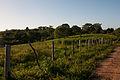 Plot Seed in Chaguaramal, Miranda State, Venezuela.jpg
