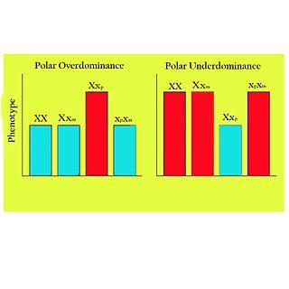 Polar overdominance