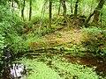 Pond, Glengarriff Forest - geograph.org.uk - 262623.jpg
